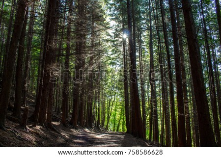 Light Rays through the Forest, Chatelherault Park, Hamilton #758586628