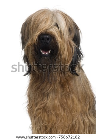 Briard, 1 Year Old, in front of white background #758672182