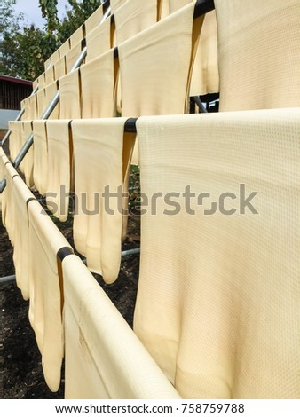Natural Rubber Sheets made from para rubber tree drying #758759788