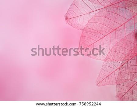 group of pink skeleton leaves on blured background, close up #758952244