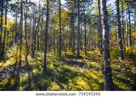 autumn forest background  #759195343