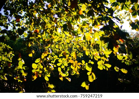 The beautiful leaves and light background  #759247219
