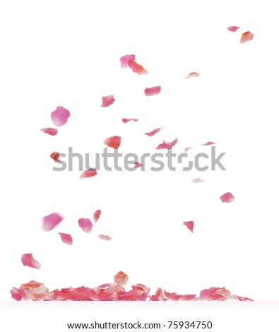 Falling rose petals. 3d rendering isolated on white background. #75934750