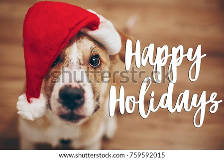 happy holidays text, seasonal greetings card sign. dog in santa hat.  cute brown dog in red hat sitting in stylish room with adorable look. happy holidays #759592015