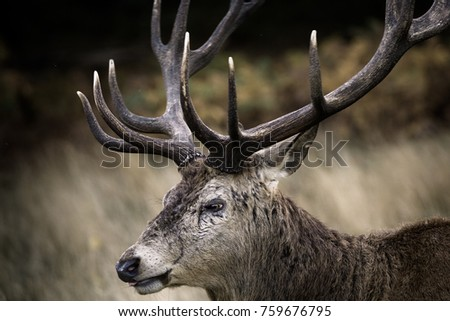 Scared old stag #759676795