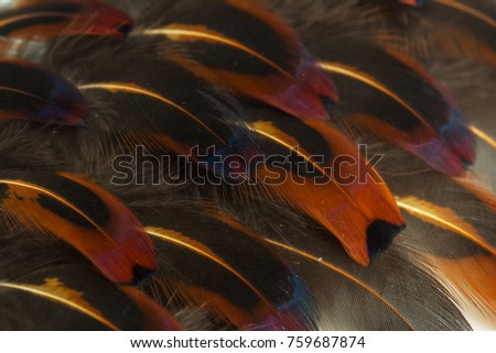 brown feathers background #759687874