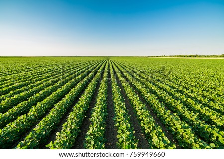 Green ripening soybean field, agricultural landscape Royalty-Free Stock Photo #759949660