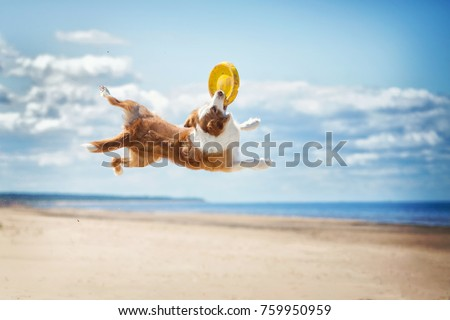 Border Collie plays in the beach Royalty-Free Stock Photo #759950959