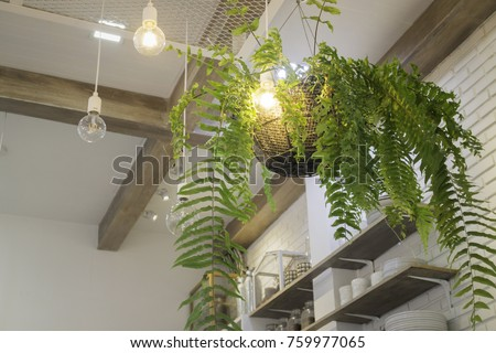 Fern in plant pot hanging on ceiling, stock photo #759977065