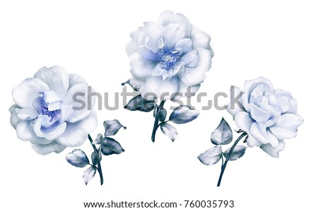 watercolor flowers. set floral illustration, Leaf and buds. Cute composition for wedding or  greeting card.  branch of flowers - roses, isolated on white background