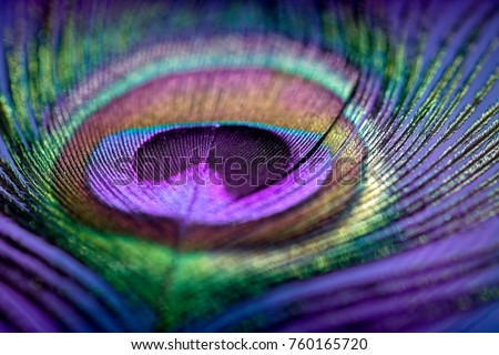Abstract macro peacock feather, blur, multicolored exotic bird Royalty-Free Stock Photo #760165720