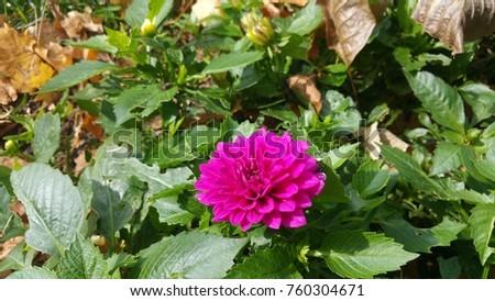 Sweet october flowers #760304671
