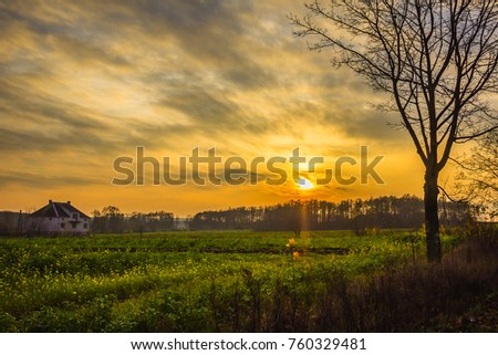 Sunset . Lonely tree and green field of alfalfa. House and forest in the background. Late autumn. Podlasie, Poland.  #760329481