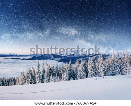 Dairy star trek in the winter woods, dramatic and picturesque scene. In anticipation of the holiday. Carpathian, Ukraine, Europe #760369414