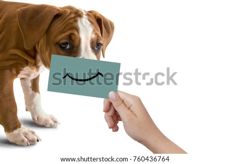 Happy dog portrait with funny smile on cardboard, isolated on white background