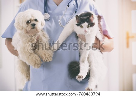 Vet with dog and cat in his hands Royalty-Free Stock Photo #760460794