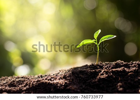 The seedling are growing from the rich soil to the morning sunlight that is shining, ecology concept. Royalty-Free Stock Photo #760733977
