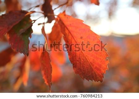 Autumn leaves exposed to autumn sunlight #760984213