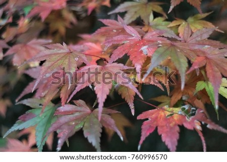 autumn leaves as orange and yellow #760996570