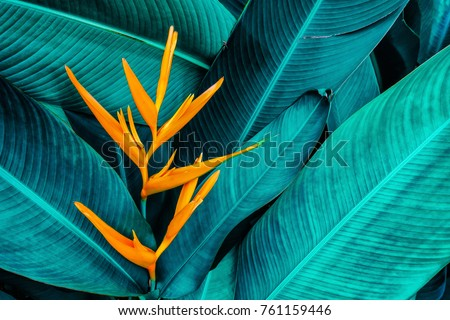 colorful flower on dark tropical foliage nature background #761159446