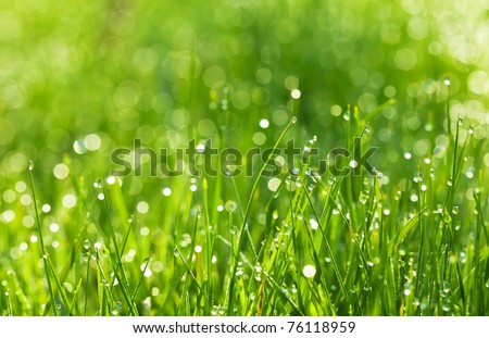 drops of dew on a green grass #76118959