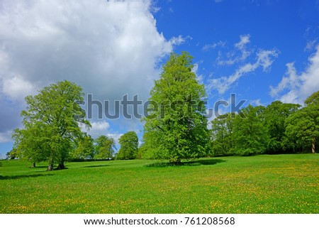 Common Lime trees, Tilia x europae, and a meadow full of buttercups and dandelions under blue sky and storm clouds, The Cotswolds, near Painswick, Gloucestershire, United Kingdom #761208568