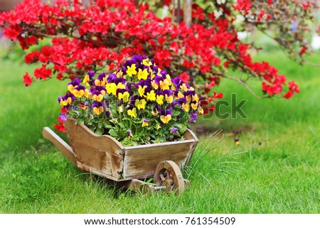 Little wooden wheelbarrow with colorful pansies #761354509