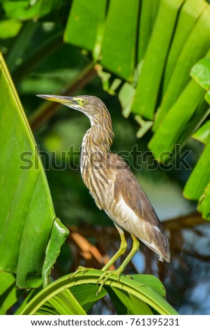 Heron thai bird #761395231