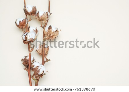 Cotton Plant Buds over Ivory Background with Copy Space #761398690