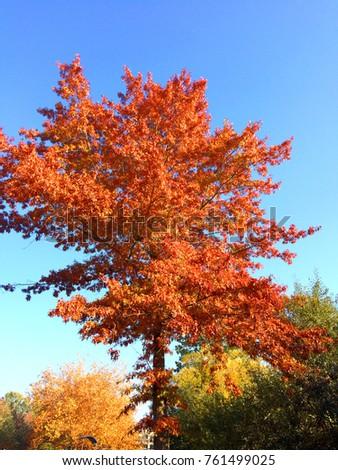 Autumn colorful tree. #761499025