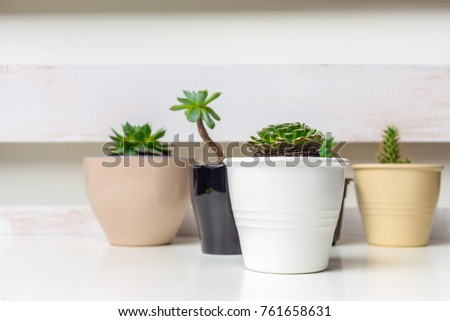Small succulent plants in pots in home interior #761658631