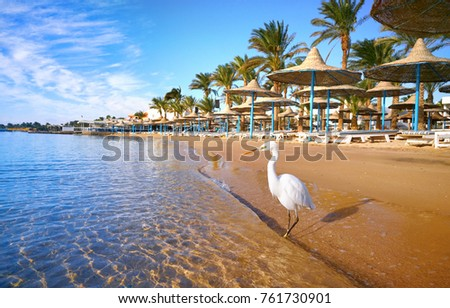 Beautiful white heron stands on golden beach with palm trees, selective focus. Fantastic terrific dreamlike romantic landscape. Concept of an ideal beach exotic vacation. Egypt Hurghada. #761730901