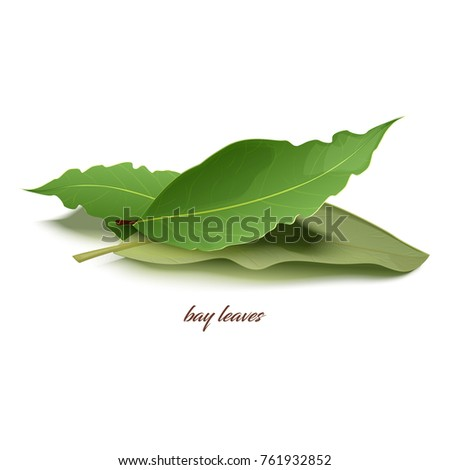 Natural dried bay leaves in small heap that used as special aromatic condiment for dishes isolated cartoon vector illustration on white background. Royalty-Free Stock Photo #761932852