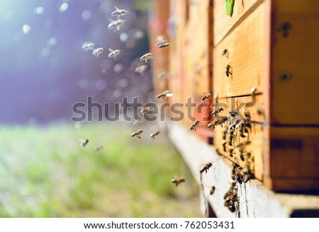 Close up of flying bees. Wooden beehive and bees.  #762053431