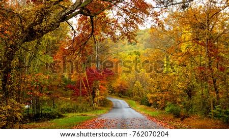 Blazing beautiful autumn colors