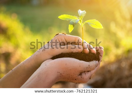 Hand holding and caring a green plant over lighting background , Planting tree , Environment , Plant in soil on nature background. Ecology concept. Royalty-Free Stock Photo #762121321