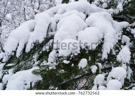 Pine branch in the snow #762732562
