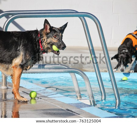 A dog having a fun at a local public pool open for free admission yo let dogs swim at the end of summer #763125004
