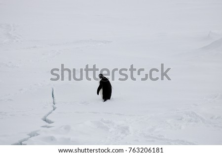 Adelie penguin with crack in the ice #763206181