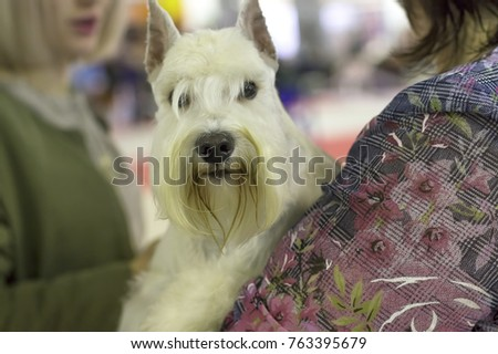 dog of terrier Close-up #763395679
