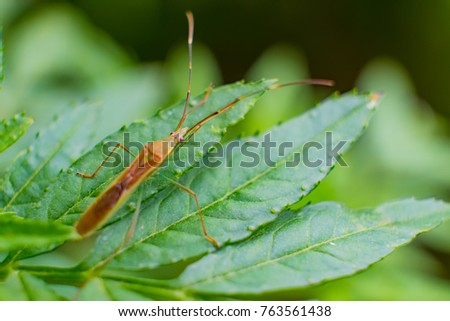 insect or bug on the green leaf with closeup picture