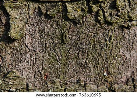 bark of an old tree #763610695