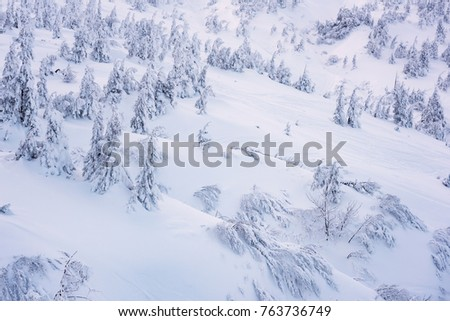Winter background, snow-covered firs with snowflakes on the mountain side