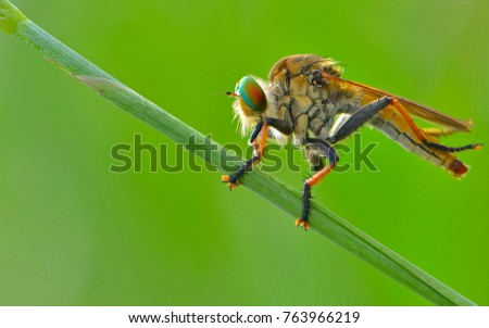 Lonely of Robberfly #763966219