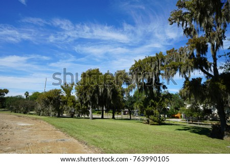Spanish Moss in the City #763990105