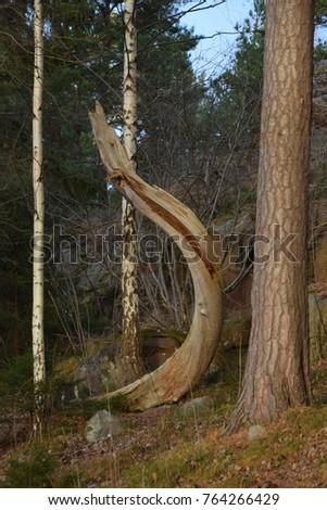 Bent trunk saluting, Grimsta naturreservat, Bromma, Stockholm, Sweden #764266429