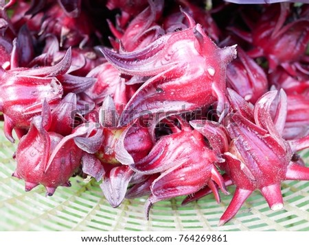Fresh roselle flowers #764269861
