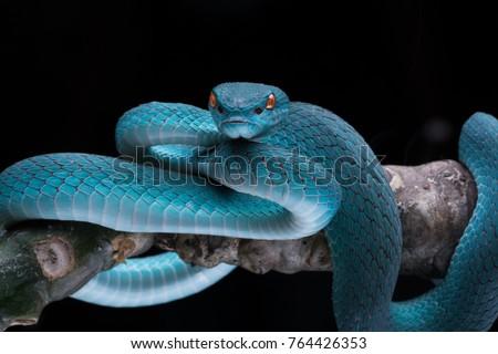 Dangerous Wild Snake  Royalty-Free Stock Photo #764426353
