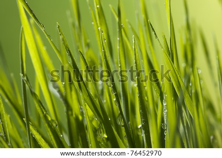 Close-up of water drops on green grass blades. #76452970