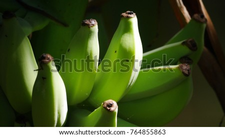 Raw Banana and sun light  #764855863